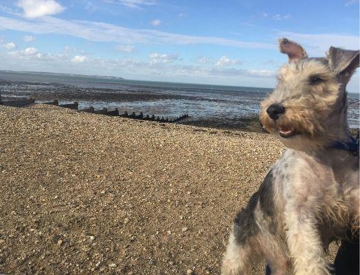 Dog Friendliness Auditor